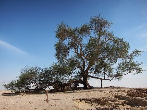 Unde se află de fapt Copacul Vieţii?